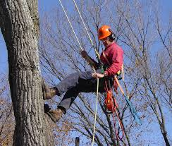 Workers of A Good Quality Tree Lopping Service