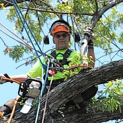 arborists for lopping
