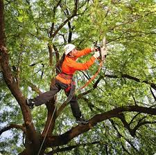 importance of tree lopping
